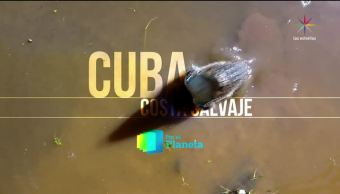 noticias, televisa news, Por el Planeta, Cuba y sus reservas marinas, Parte 1, reservas marinas cubanas