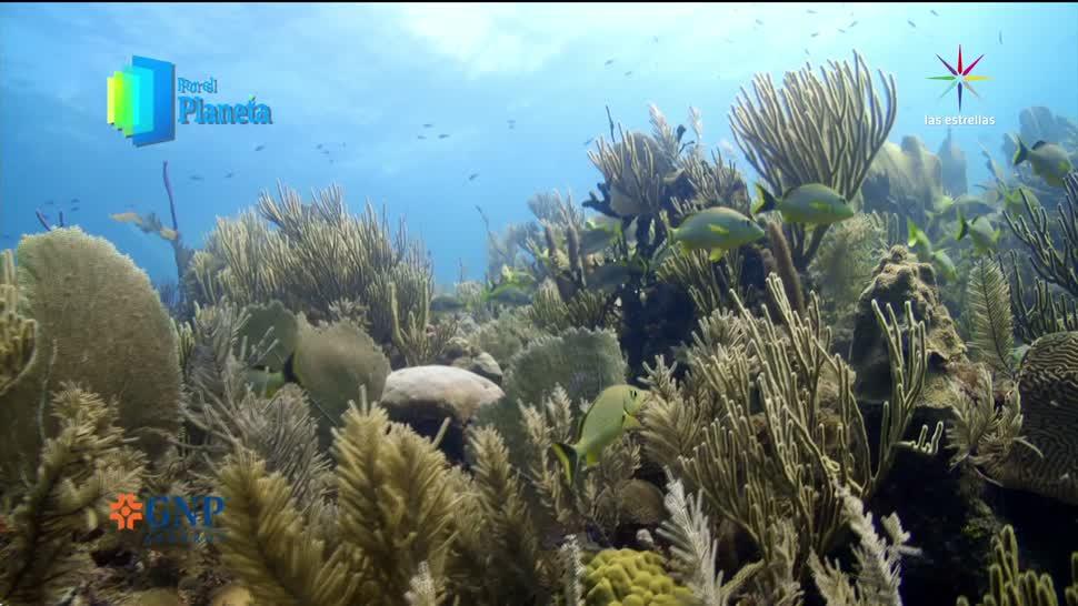 noticias, televisa news, Por el Planeta, Cuba, reservas marinas, Parte 2