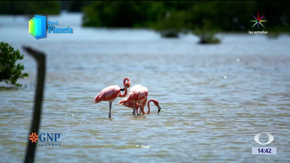 noticias, noticieros televisa, La Ciénega de Zapata, por el planeta, tesoro natural, Cuba