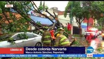noticias, forotv, Vientos, derriban, 18 árboles, CDMX