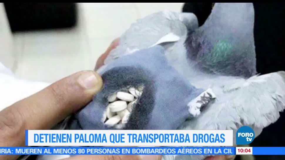Extra Extra, paloma, traficar, drogas
