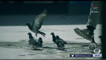 Video, musulmán, terrorismo, Kuwait
