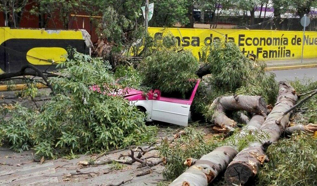 Árbol, taxi, río Churubusco, clima, cdmx, coyoacán