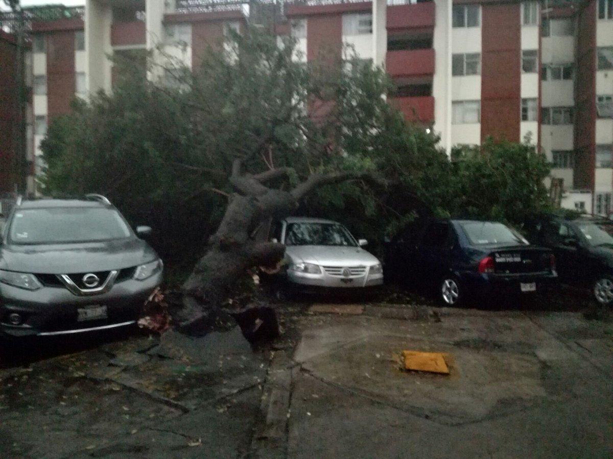 Árboles tirados sobre automóviles en Coapa