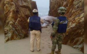 Personal federal vigila el lugar donde fue hallada una ballena muerta