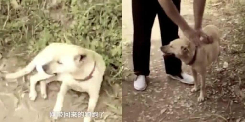Perro encuentra a un bebé después de ser enterrado vivo