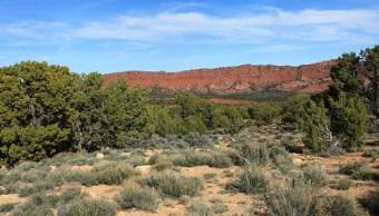 Un estudio ofrece una nueva estimación de bosques en zonas secas en la Tierra (Getty Images/archivo)
