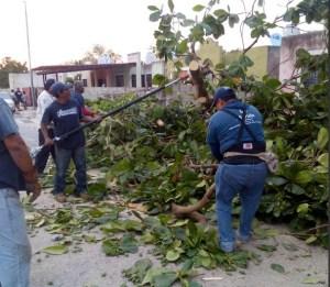 Caída de árboles por turbonada en Mérida, Yucatán. (Twitter @PCivilMerida_)