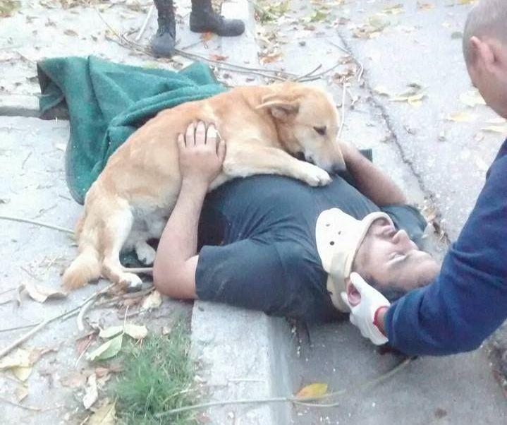 Tony el perro abrazó dueño después accidente