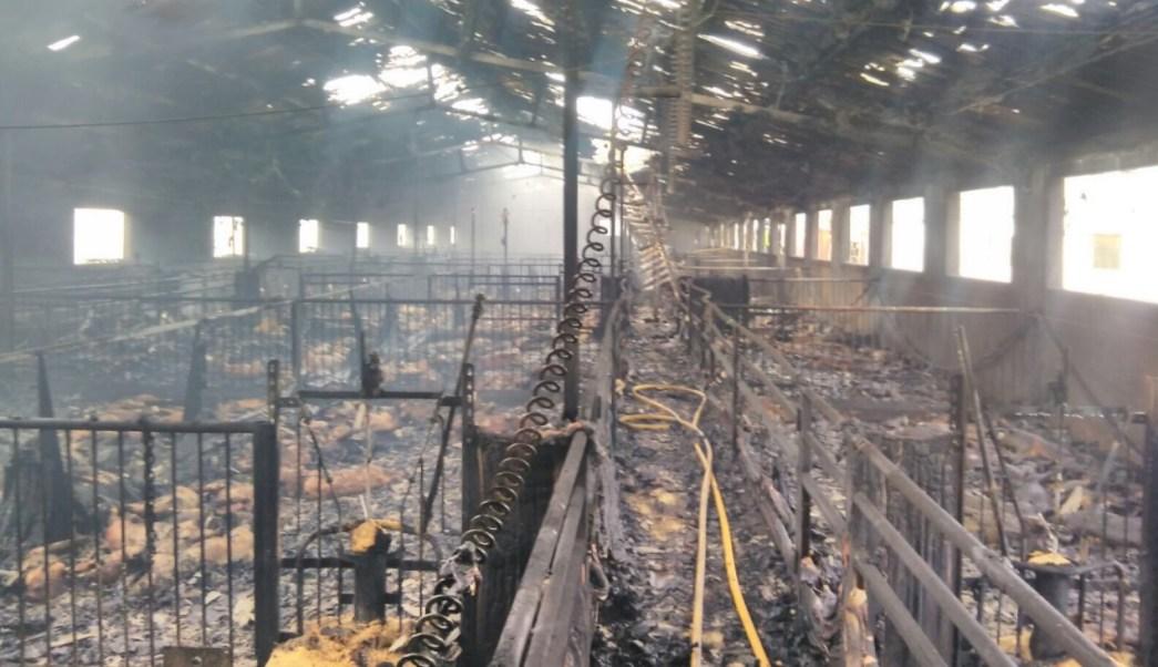 Autoridades españolas no han revelado la causa del incendio en que murieron calcinados mil cerdos (Foto: 112rmurcia.es)