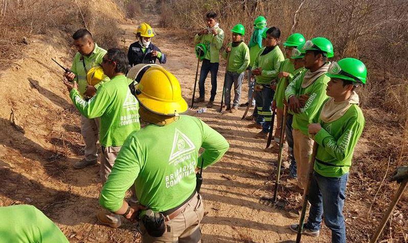 Reportan cinco incendios forestales en tres municipios de Chiapas