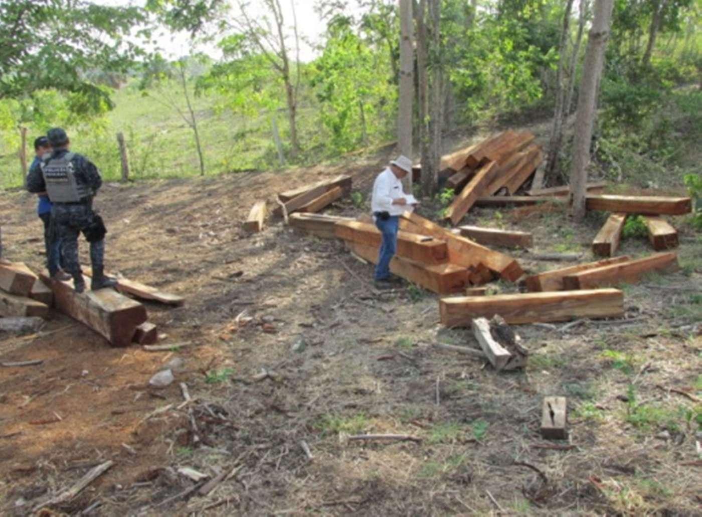Delegados de Profepa combaten el trafico de madera