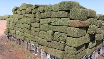 Decomisos de droga superan los 20 mil kilogramos en abril (Noticieros Televisa)