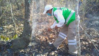 Chiapas, Incendios forestales, Quema agricola, Hectareas, Noticias, Medio ambiente