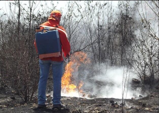 Incendios forestales en Yucatán. (Twitter @GobYucatan)