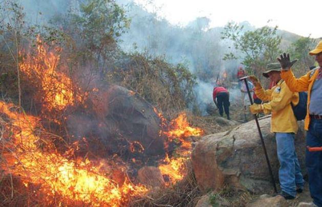 Incendios, Valles, Jalisco, Forestales, Noticias, Guadalajara