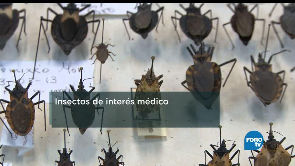 Insectos, transmisores, enfermedades, entomología, salud, humanos