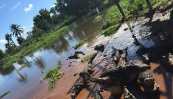 La Cienega de Zapata, lugar donde habita el cocodrilo cubano