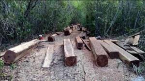 Madera asegurada en la biosfera de Calakmul Campeche