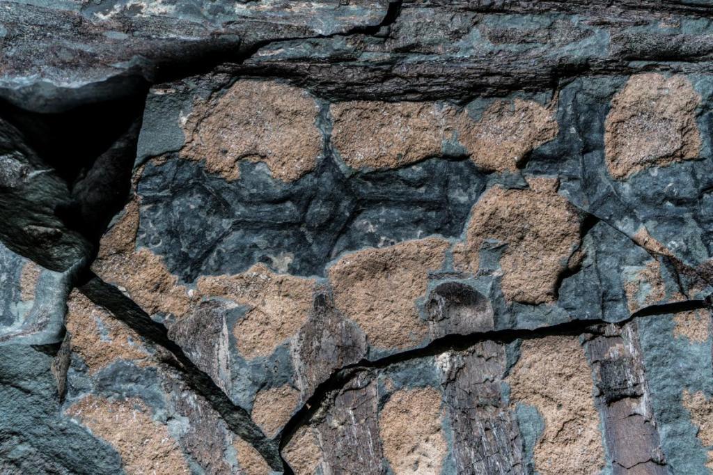 nodosaurus-fosil_4