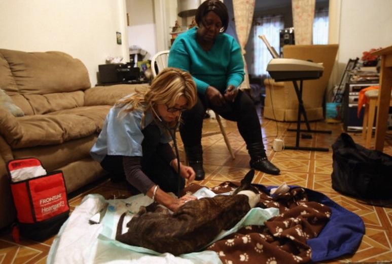 Un perro es atendido por un veterinario (Getty Images)