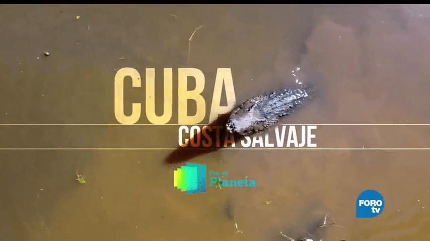 Por, el Planeta, Cuba, Costa Salvaje, Jardines Reina, Parque Guanahacabibes