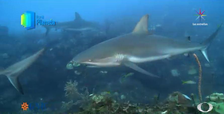 Por el planeta - Tiburones de Jardines de la Reina