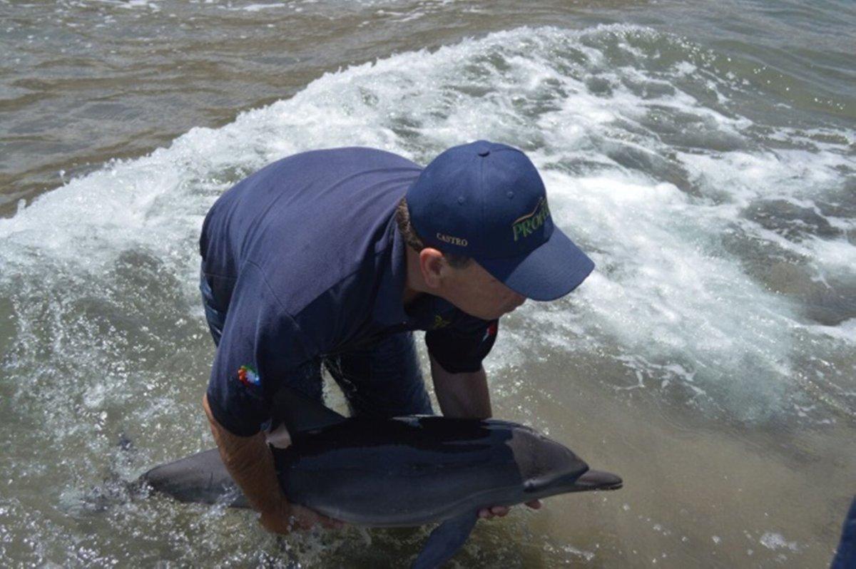 Profepa reintegra a delfín varado en Loreto