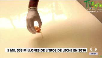 noticias, televisa, Día Internacional de la Leche, leche, onu, productos lácteos