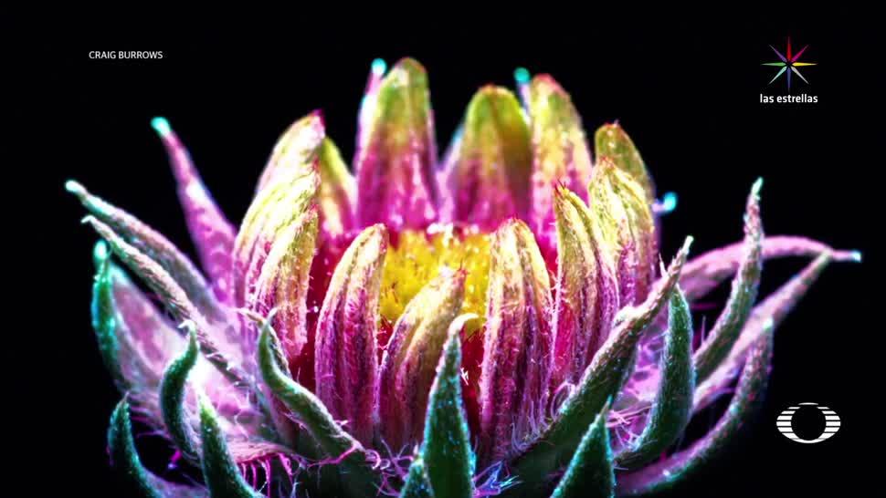 noticias, televisa, Fotosíntesis, luz ultravioleta, plantas, colores fluorescentes