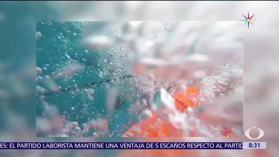 Buzo, capta ataque, tiburón, Florida
