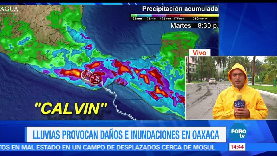 Mantienen, alerta, Oaxaca, Calvin