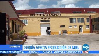 miel, Campeche, producción, pérdidas