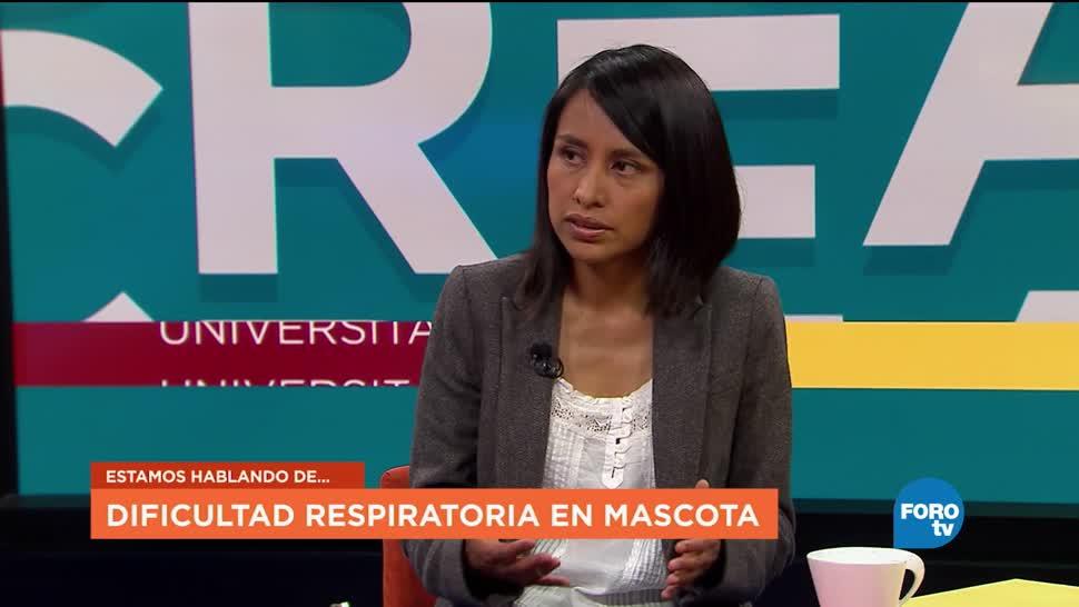 cuidados, mascotas, enfermas, Ylenia Márquez