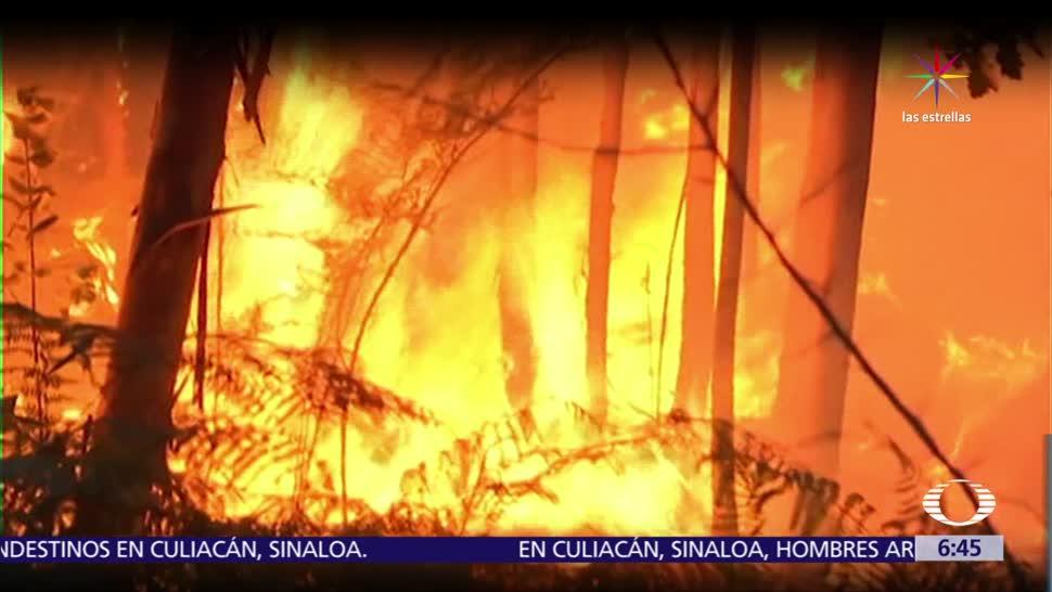 Portugal, peor incendio forestal, últimos 50 años, 62 murieron