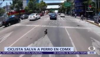mujer ciclista, salvar a un perro, atropellado, Avenida Revolución, CDMX