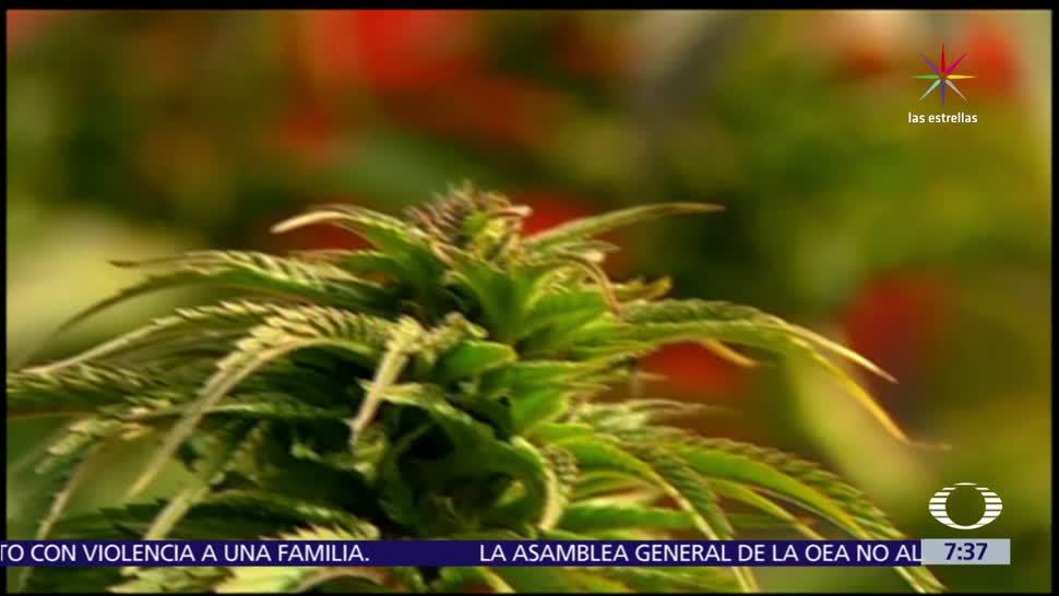 decreto que legaliza, uso medicinal, marihuana, México
