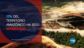 Amazonia, gana, leyes, pierde, recursos, naturales