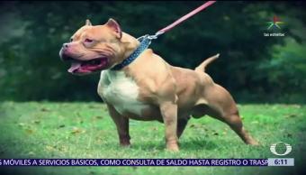 México, prohíbe, peleas de perros, sancionados