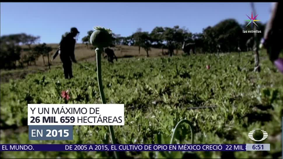 México, tercer, productor de amapola, mundo