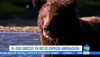Extra Extra, Oso grizzly , especies amenazadas