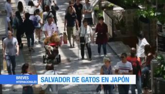 salvador de gatos, Japón