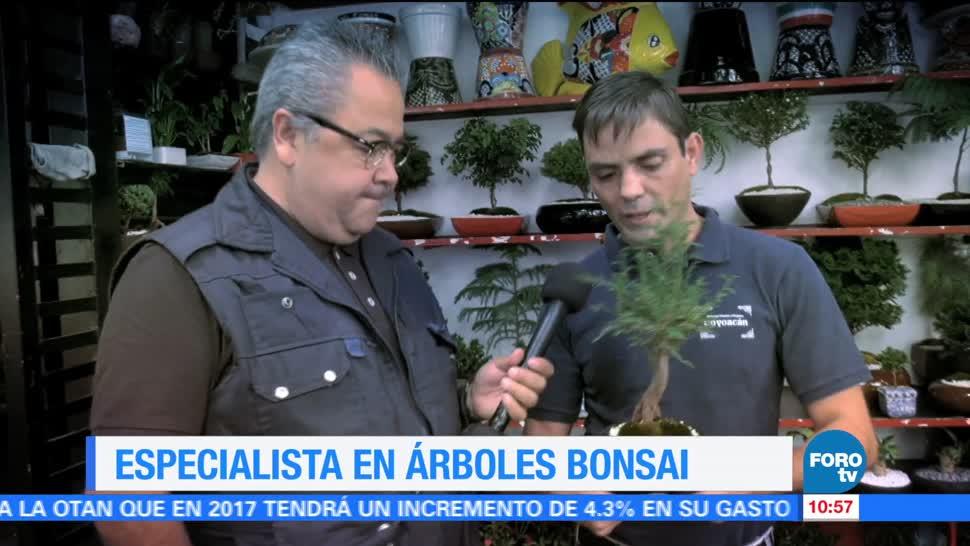 Enrique Muñoz, reportaje, especialista, árboles bonsái