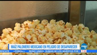 México, palomitas de maíz, mundo, riesgo de desaparecer