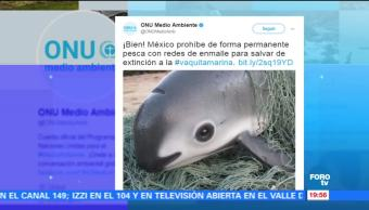 Emplean, acciones, proteger, vaquita marina