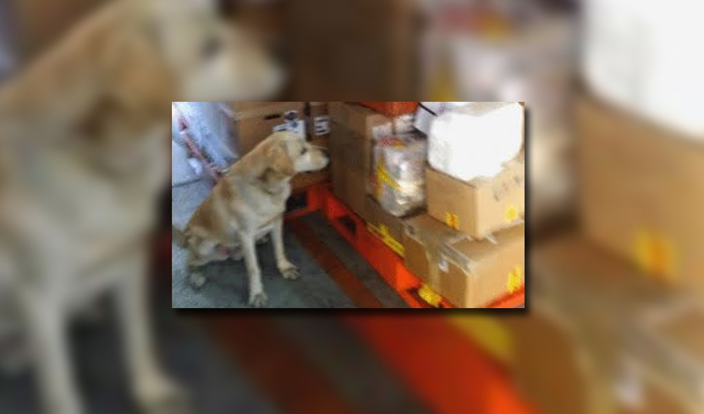 Binomio canino detecta droga cristal en motor
