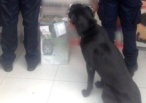 Binomios caninos hallan droga oculta en una bocina en Jalisco