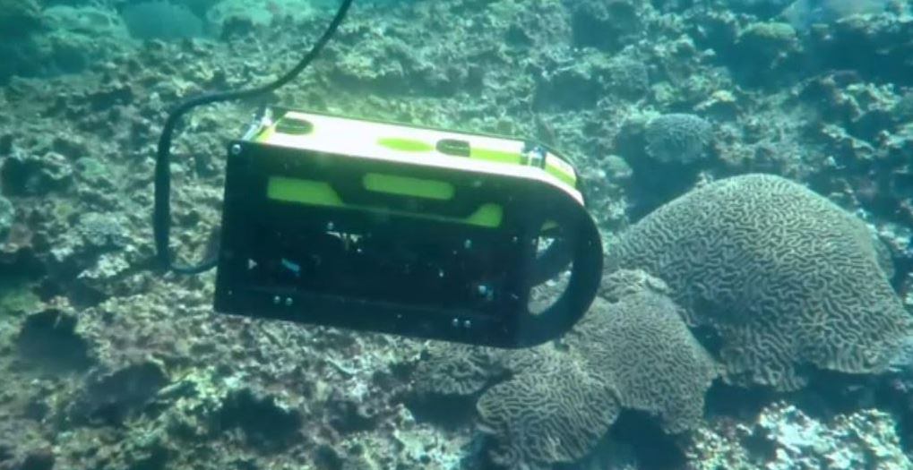 descubren nueva zona de arrecifes en costas de veracruz