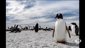 Exposición, fotográfica, Las Malvinas, UNAM, Universum, Exposiciones fotográficas