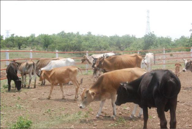 severa sequia afecta a municipios de sinaloa